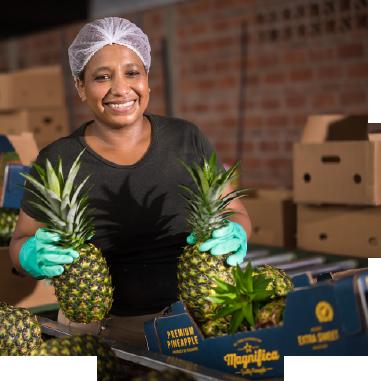 img-circle-packing-pineapple-page-1