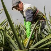 img-pineapple-sec3