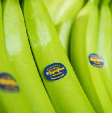 organic-banana_final_0007__Clip-Group_