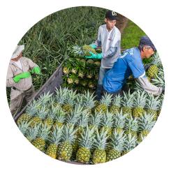img-circle-pineapple-page-3
